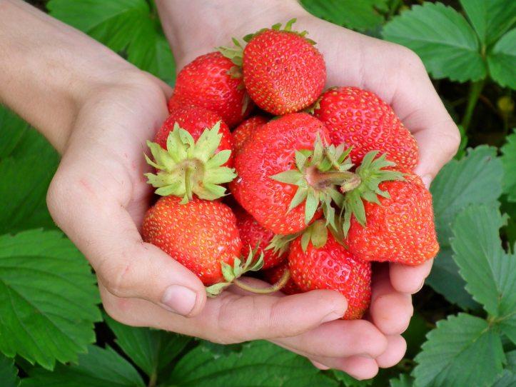 close-up-food-fruit-65271